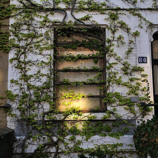 This weekend ivy exploded all over NYC